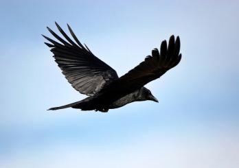 photographing-birds-1e